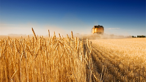 小麦收购同比减少千万吨,官方:收购量与产量不能直接挂钩