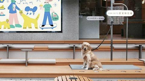 把猫猫狗狗带来店里,会让咖啡茶饮店的生意变好?