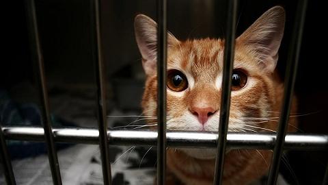 法治面 | 立法规制虐待动物,地方可先行探索或专门制定伴侣动物保护法