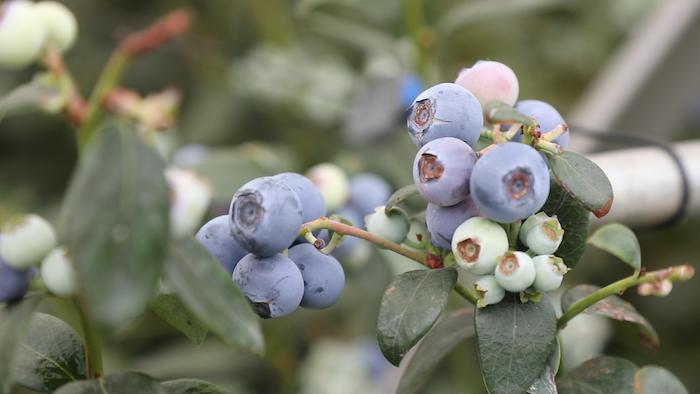【專訪】扎根云南,怡顆莓全球副總裁說中國擁有巨大的漿果消費潛力