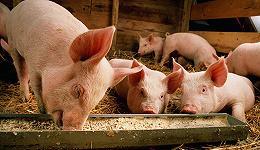 直通部委   发改委发布生猪价格过度下跌三级预警 教育部:填报志愿谨防诈骗陷阱