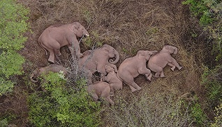 【特写】大象推门而入