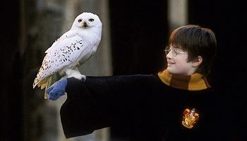 过去二十年间最知名的英国英雄是哈利·波特? | 一周新书推荐