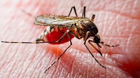 中国消除疟疾获世卫组织认证,防止输入性病例成新挑战