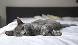 趣睡科技到底有没有核心竞争力?