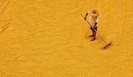 中国将首次举办国际粮食减损大会,农业农村部:节粮减损有助粮食安全