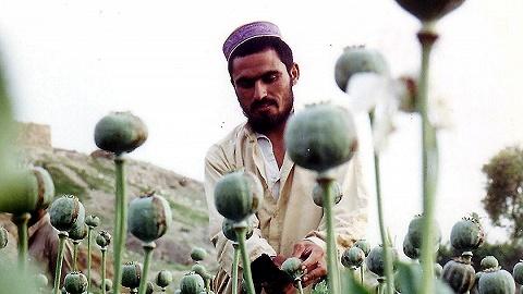 """97%阿富汗人或陷入贫困,鸦片非法种植将迎来""""春天""""?"""