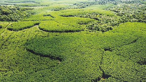 金光集团将扩大在华林业面积,筹备碳汇项目开发