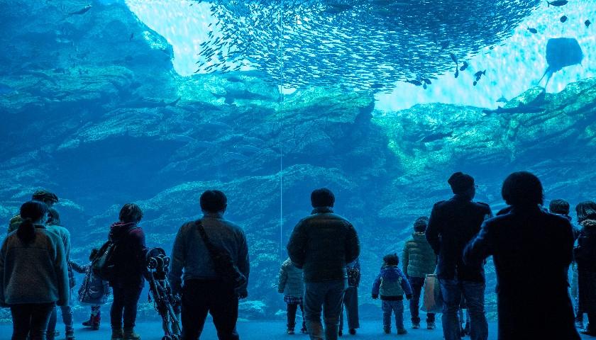 财说 | 盘中闪崩50%,海昌海洋公园回应来了,是虚惊一场还是另有隐情?