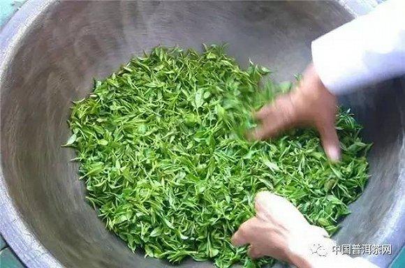 機器人採茶_我凭什么选择一款普洱茶:工艺篇 界面新闻·JMedia