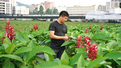 广州市林业和园林科学研究院工程师张继方:园林人和他们守护着的花城