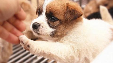 深圳将为全市所有犬只注射芯片