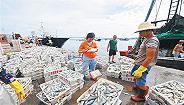 """海南推进渔业生产与海洋生态保护""""双提升"""""""