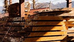 塑造了人类历史的木头