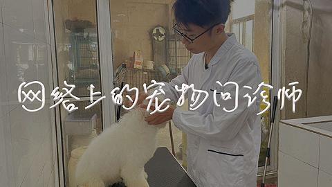 宠物问诊师:9年为上万只宠物云治病