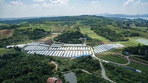 海南省出台十一条措施支持共享农庄发展